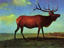Elk - Albert Bierstadt
