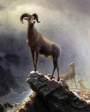 Sheep and Goats Paintings