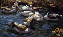 Ducks in the Reeds under the Boughs - Alexander Koester