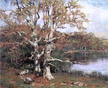 Pasture Oaks