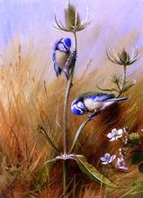 Bluetits On A Teasel - Archibald Thorburn