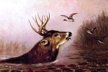A Deer in Marsh - Arthur Fitzwilliam Tait
