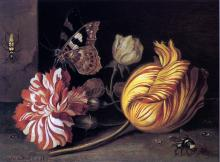 Study of Flowers and Insects - Balthasar Van der Ast
