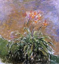Hamerocallis - Claude Oscar Monet