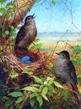 Thurshes Nest - Fidelia Bridges
