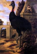 A Cassowary - Francis Barlow