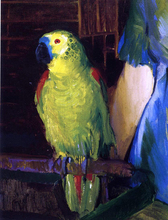 A Parrot - George Wesley Bellows
