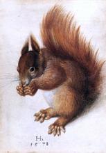 A Squirrel - Hans Hoffmann