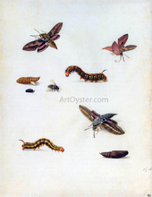 Insects - Herman Henstenburgh