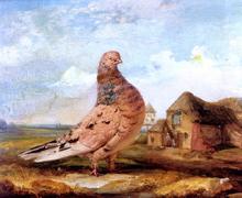 Pigeons Paintings