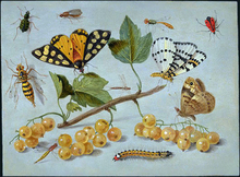 Butterflies and Insects - Jan Van I Kessel