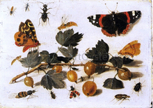 Butterflies and Insects and a Spray of Gooseberries - The Elder Jan Van Kessel