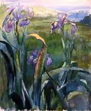 Blue Iris, Study