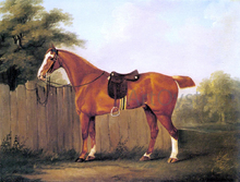 A Chestnut Hunter Tethered to a Fence - John Nost Sartorius