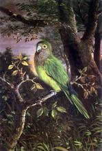 A Parrot on a Branch - John OBrien Inman