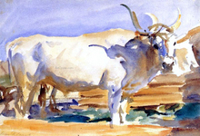 A White Ox at Siena - John Singer Sargent