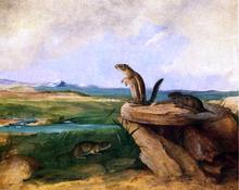 Harris Antelope Ground Squirrel, N.M. California Vole and Wood Rat - John Woodhouse Audubon
