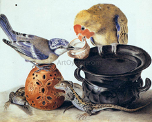 A Parrot, Blue Tit, Two Lizards, and Vases - Luisa Vitelli