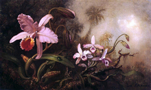 Orchids and a Beetle - Martin Johnson Heade