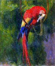Parrots Paintings
