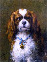 A King Charles Spaniel with a Blue Ribon