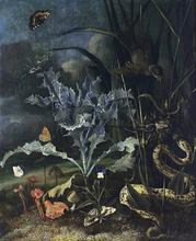 A Forest Floor Still-Life - Otto Marseus Van Schrieck
