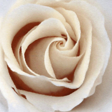 Oil painting for sale - Pretty Sepia Rose - Our Original Collection