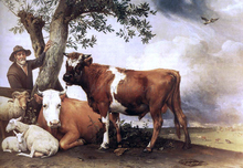 Young Bull - Paulus Potter
