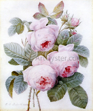 Roses - Pierre-Joseph Redoute