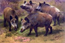 Four Boars in a Landscape - Rosa Bonheur
