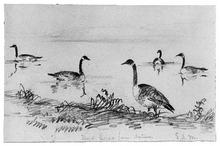 Wild Geese (from McGuire Scrapbook) - Shepard Alonzo Mount