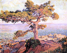 A Pine by the Mediterranean Sea