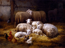 Sheep And Chickens In A Farm Interior - Theo Van Sluys