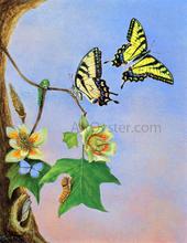 Butterflies Paintings