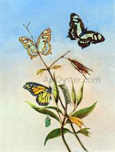 Butterflies - II Titian Ramsey Peale