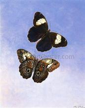 Caligo Martia (Butterflies) - II Titian Ramsey Peale