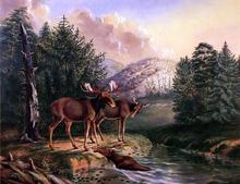 Moose in Maine - II Titian Ramsey Peale