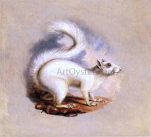 White Squirrel - II Titian Ramsey Peale