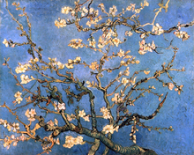 A Branch with Almond Blossom