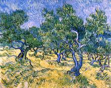 Olive Grove - Vincent Van Gogh