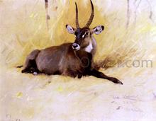 A Common Waterbuck - Wilhelm Kuhnert