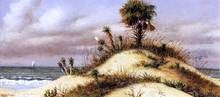 Florida Seascape with Sand Dune, Palm Tree, Yucca, Cactus and Sailboat