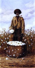 Negro Man in Cotton Field with Basket of Cotton