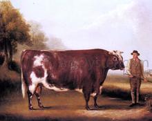 A Dark Roan Bull - William Davis