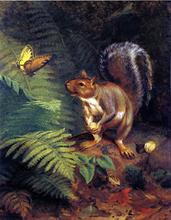 Squirrels Paintings