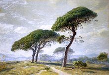 View of Cannes with Parasol Pines