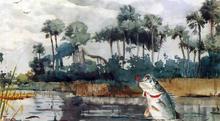 Black Bass, Florida - Winslow Homer
