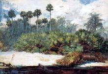 In a Florida Jungle - Winslow Homer