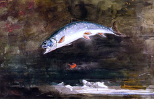 Jumping Trout - Winslow Homer