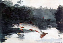 Leaping Trout - Winslow Homer